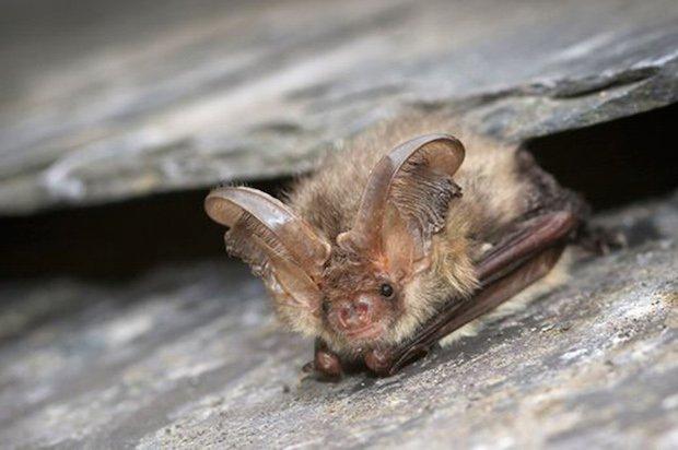RHS Garden Wisley Bat Walk cr Tom Marshall.jpg