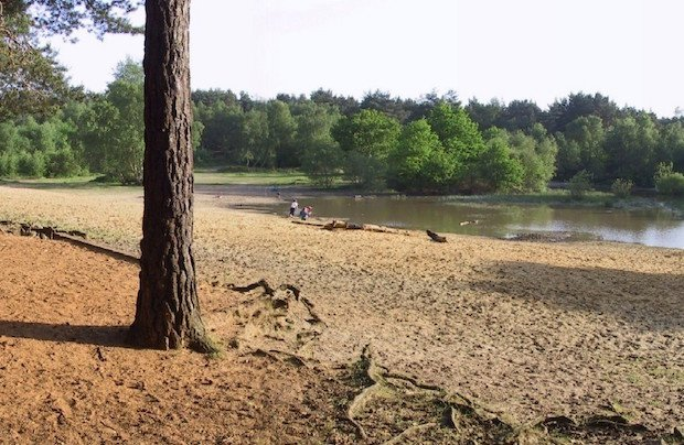 horsell common copy.jpg