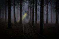 foggy-mist-forest-trees-42263 (1).jpeg