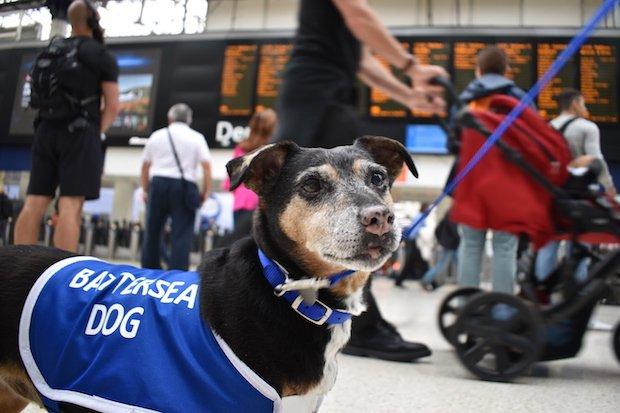 Millie, Waterloo Station 2.JPG