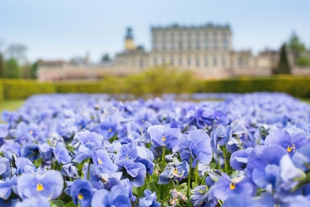 17_Apr_Cliveden in flower -7 copy.jpg