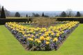 Cliveden - Grounds - Parterre Spring -  Photo Credit National Trust copy.JPG