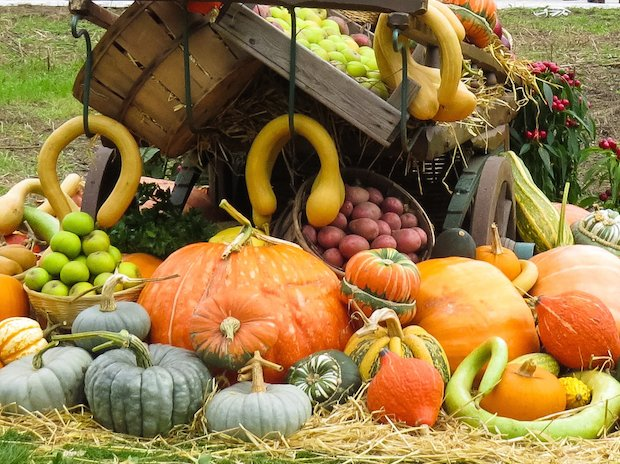 RHS Garden Wisley November 2017 event Late Fruit and Veg show cr RHS.jpg