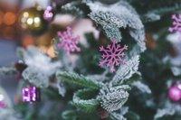 holidays-purple-tree-home-6271.jpg