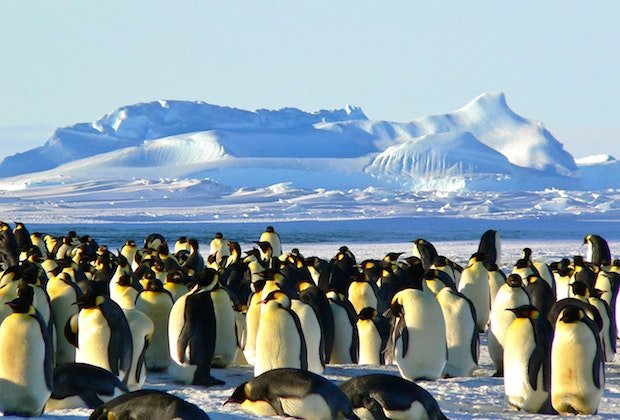 emperor-penguins-antarctic-life-animal-46235 copy.jpeg