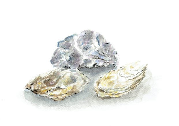 Alison Art - Oyster[2].jpg