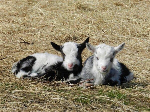 Twin kids at Surrey Wildlife Trust