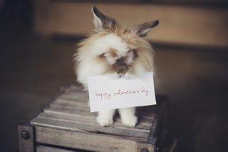 valentines-day-surrey-singletons-lead-image.jpeg