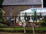 the-donkey-pub-farnham.jpg
