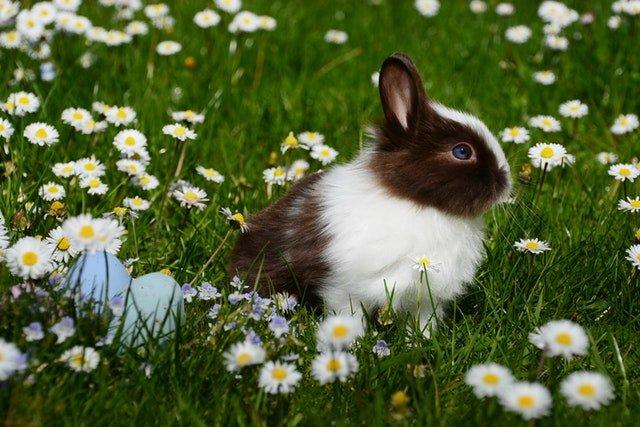 adorable-easter-bunny-and-eggs.jpeg