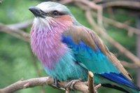 birdworld-surrey-easter-activities.jpg