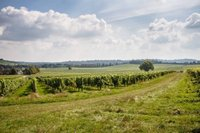 denbies-vineyard-easter-chocolate-trail.jpg