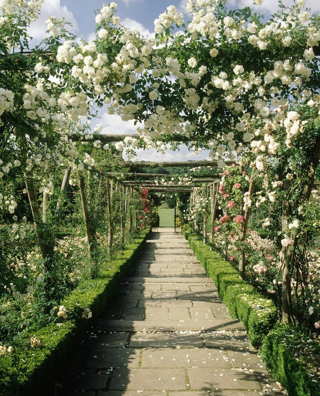 Polesden Lacey rose garden ©National Trust Images, Rob Matheson copy-min.jpg