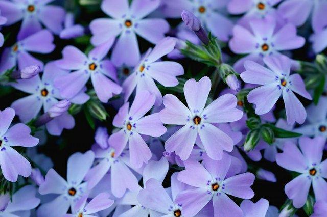 flower-3331822.jpg