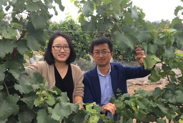 wine-couple-nlngxia-travel.JPG