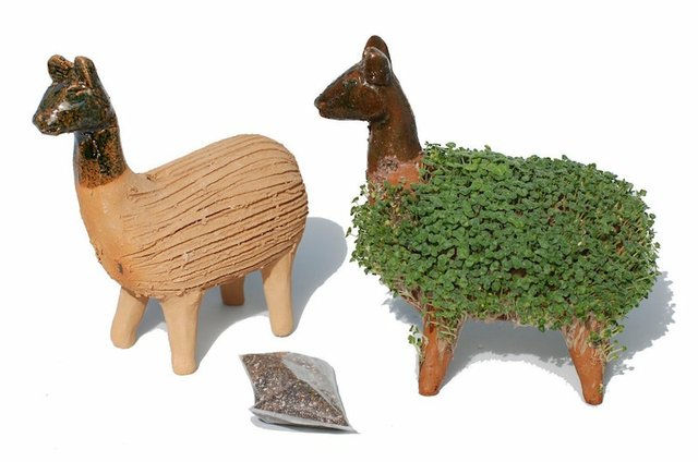 llama-grow-your-own-cress.jpg