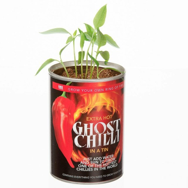 extra-hot-ghost-chilli-grow-your-own.jpg