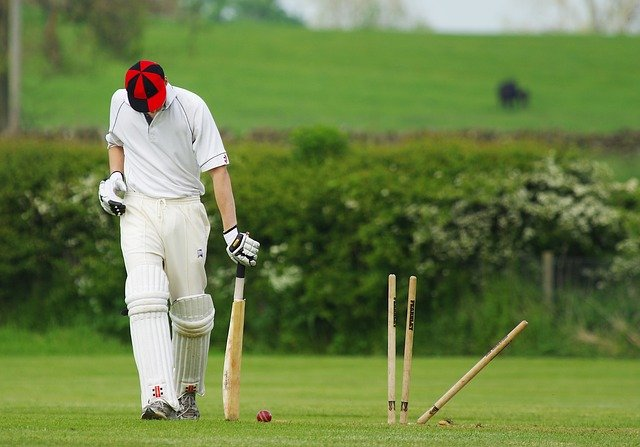 cricket-724616_640.jpg