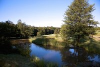 chiddingfold-golf-club.jpg