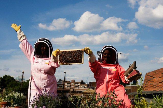 Cheering bees copy.jpg