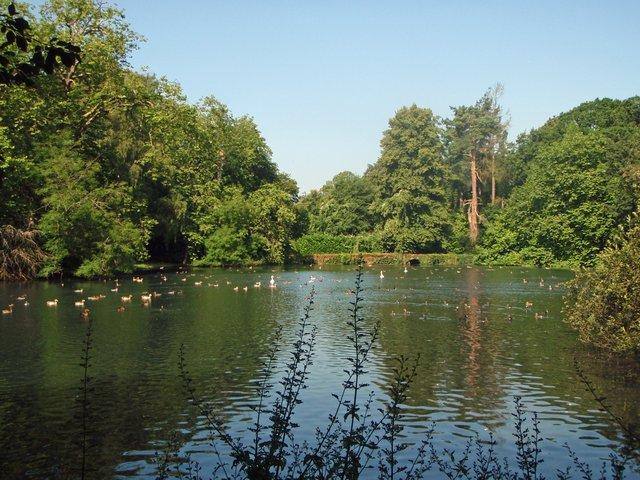 busbridge-lakes-wedding-reception-event-venue-gardens-in-surrey-bottom-lake-vista-birds-(5mb.jpg