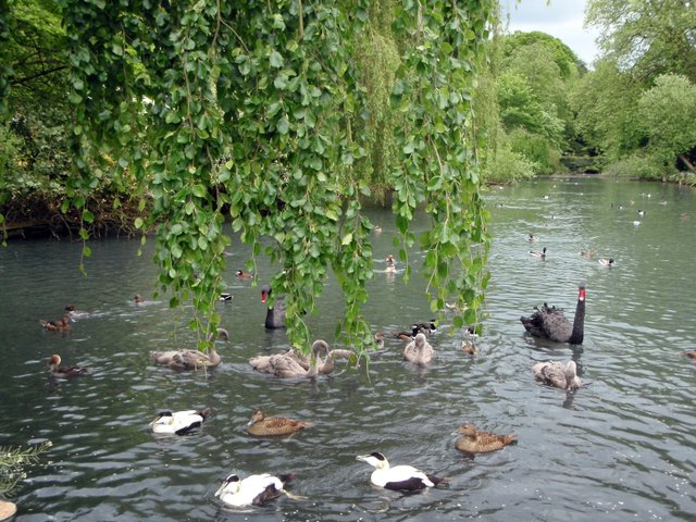 busbridge-lakes-wedding-reception-event-venue-gardens-in-surrey-canal-lake-feeding-time.jpg