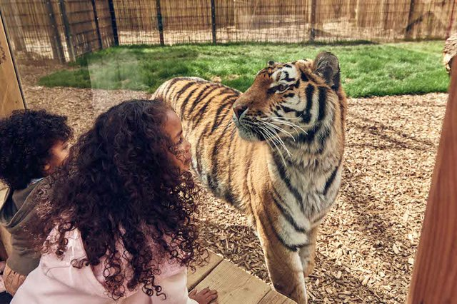 BUCK_Land_Tigers-17 copy.jpg