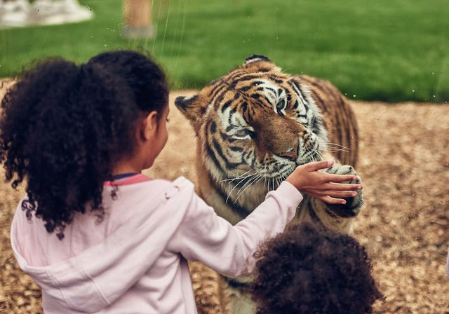 BUCK_Land_Tigers-37 copy.jpg