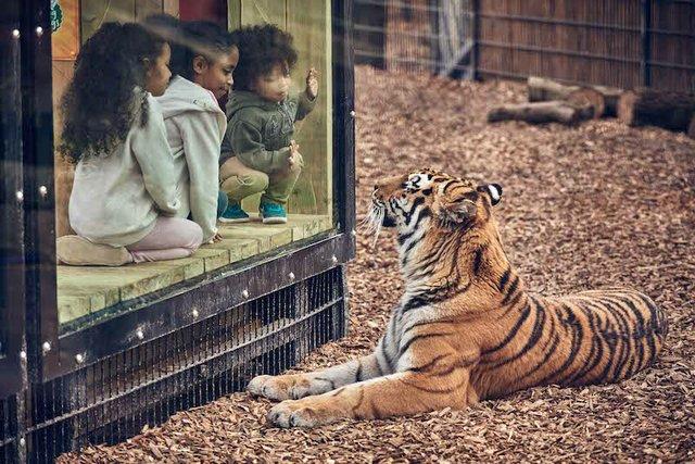 BUCK_Land_Tigers-20 copy.jpg