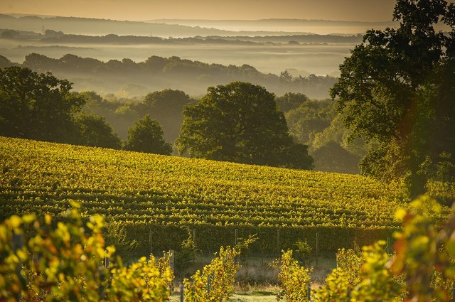 Blackdown-Ridge-Vineyard-7 smaller.jpg