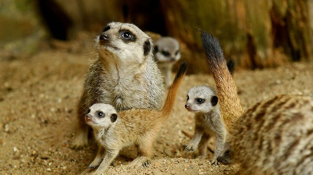 Zoo keeper.jpg