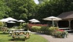 the-red-lion-pub-beer-garden-horsell.jpg