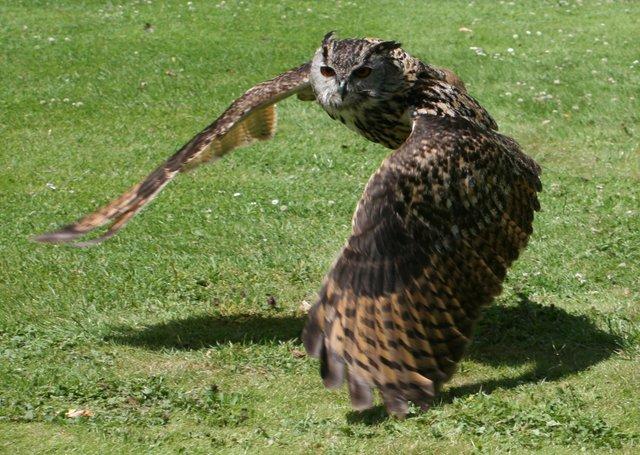 Birds of Prey cr RHS.jpg