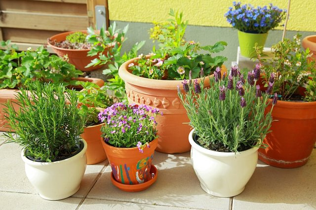 Pots in Shade - Squire's-min.jpg