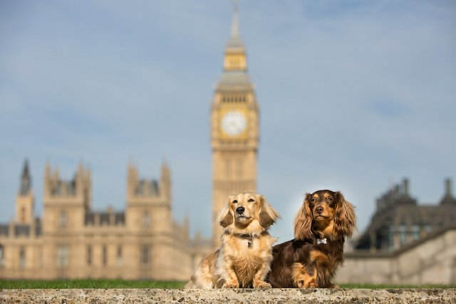 Huxley Hounds  London Dog Photography -70.jpg