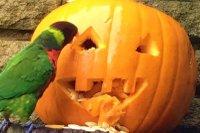 birdworld halloween.jpg