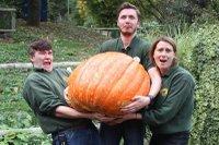 bocketts pumpkin.jpg