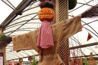 squires halloween.jpg