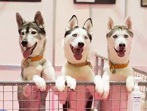 general-dog-image-3-copy.jpg