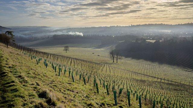 Smoke & Mist over Denbies by Alan Thompson.jpg