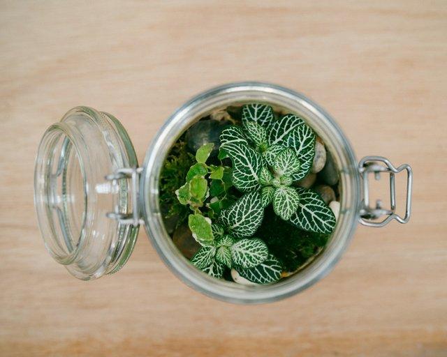 Jar and Fern0324 (Medium).jpg