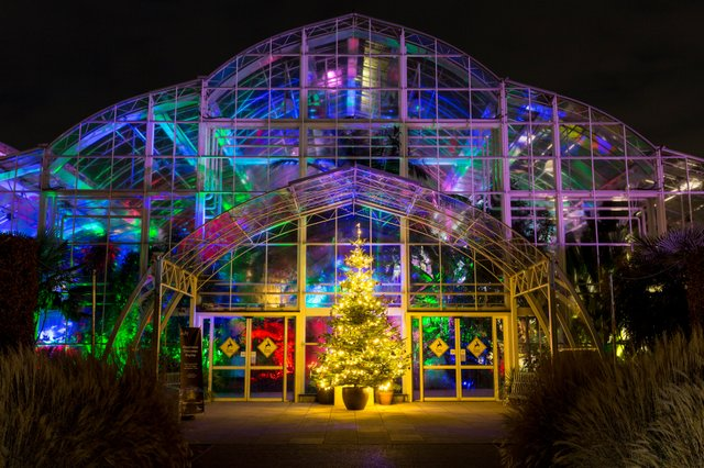 RHS Wisley Christmas Glow 2017 – The Glasshouse with lights and Christmas tree ©RHS. Credit RHS, Paul Debois (PDB_1_12_17_0285).jpg