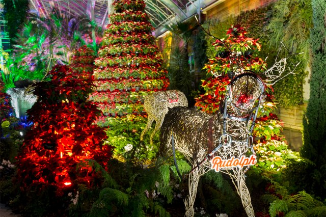 RHS Garden Wisley Christmas Glow display in The Glasshouse ©RHS. Credit RHS, Paul Debois(PDB_1_12_17_0320).jpg