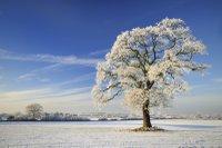 winterwalks.jpg