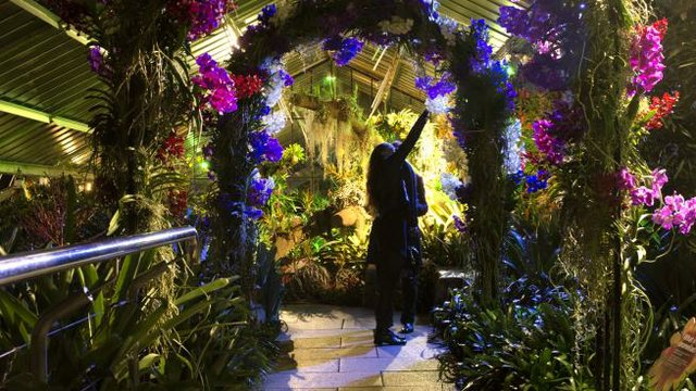 An arch at Orchid Festival After Hours 2019.jpg