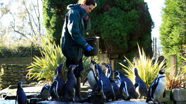 penguin-feeding-at-birdworld-credit-colin-mckenzie-custom.jpg