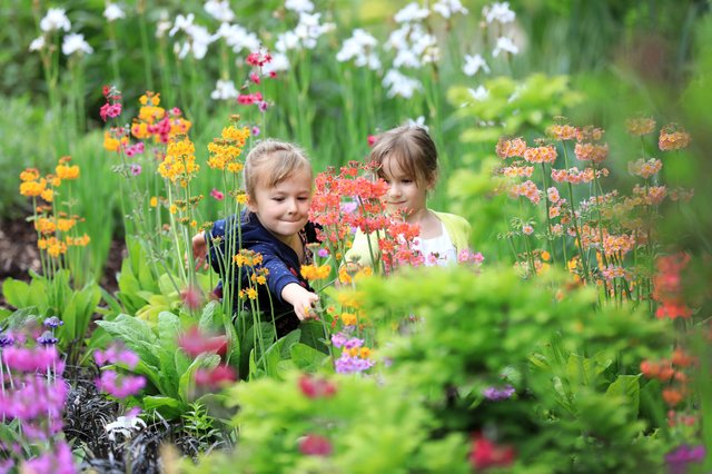 Family Gardening Festival - RHS Garden Wisley, 30th May 2018
