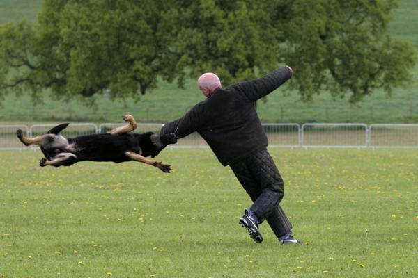 Surrey Police Family Fun Day