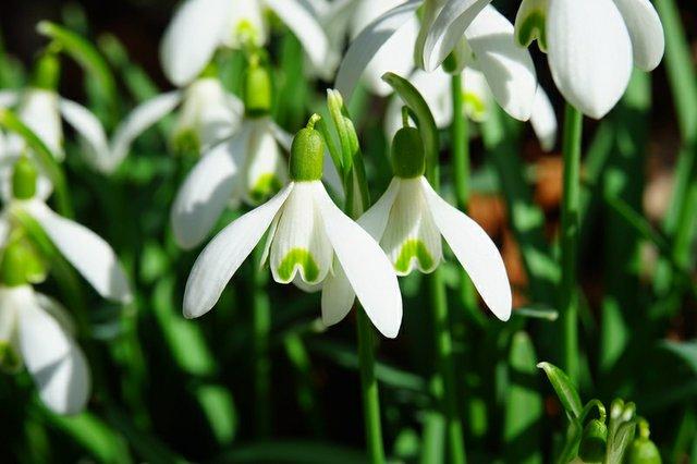 best-flowers-spring.jpg