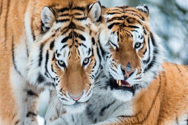 marwell-zoo (1).jpg